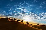 Desert - Camels & Nomads