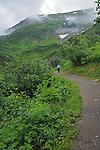 A hiker walks up the path on Mt. Robert in Juneau, Alaska.  Wispy clouds circle the peak.