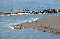 Sightseers view seals and their pups basking on a sandbank near Jenner, Somoma County, California, USA, at the estuary of the Russian River where it enters the Pacific Ocean. 201304292053 <br /> <br /> Copyright Image from Victor Patterson, 54 Dorchester Park, Belfast, UK, BT9 6RJ<br /> <br /> Tel: +44 28 9066 1296<br /> Mob: +44 7802 353836<br /> Voicemail +44 20 8816 7153<br /> Skype: victorpattersonbelfast<br /> Email: victorpatterson@me.com<br /> Email: victorpatterson@ireland.com (back-up)<br /> <br /> IMPORTANT: If you wish to use this image or any other of my images please go to www.victorpatterson.com and click on the Terms &amp; Conditions. Then contact me by email or phone with the reference number(s) of the image(s) concerned.