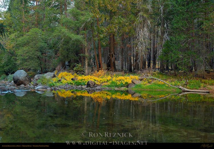 Autumn Foliage Reflected on the Merced River at Dawn near El Capitan, Yosemite National Park