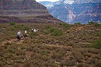 Mule guide and dudes on the Tonto Platform heading toward Plateau point