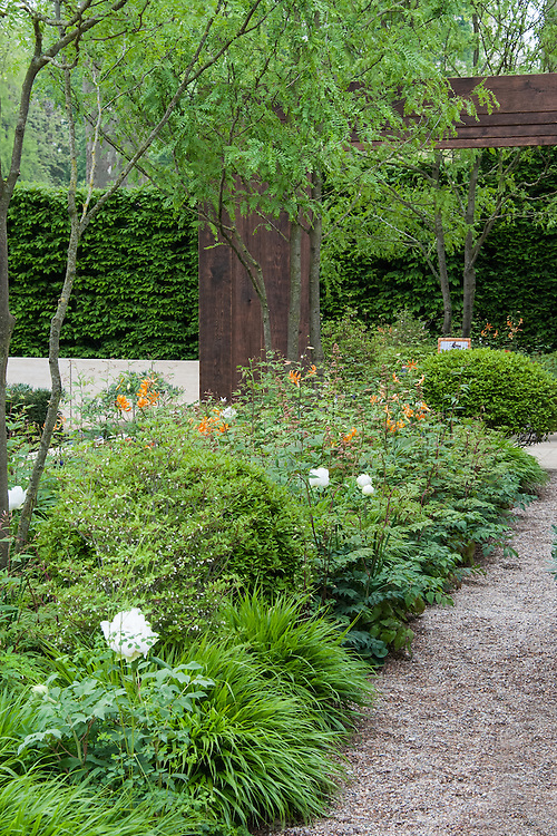 The Laurent-Perrier Garden,  designed by Ulf Nordfjell, Gold medal winner, RHS Chelsea Flower Show 2013. Honey locust (Gleditsia) trees, 'Orange Marmalade' lilies and Hakonechloa macra grass in the foreground.