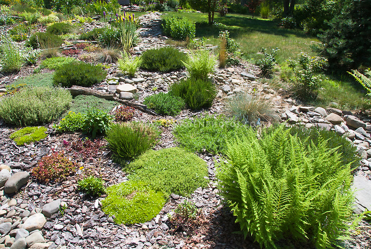 Rock garden plants – Plants for a Rock Garden