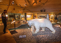 A polar bear on exhibition in the Svalbard Museum in the town of Longyear.  <br /> <br /> Norway&rsquo;s polar bear population lives in and around Svalbard. Any global warming will affect the around 3000 polar bears in the area. <br /> <br /> <br /> Svalbard (formerly known by its Dutch name Spitsbergen) is a Norwegian archipelago in the Arctic Ocean. Situated north of mainland Europe, it is about midway between continental Norway and the North Pole. <br /> <br /> <br /> (photo: Fredrik Naumann/Felix Features)
