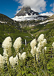 bear grass glacier park, beargrass clements mountain, reynolds creek glacier park, logan pass bear grass