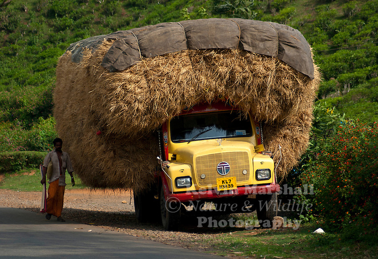 Hay Truck Shelter : Transporting hay indian style kelvin marshall nature