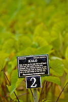 A sign designates a lo'i pond of kalo or taro, a staple food in Polynesian culture, at Limahuli Gardens, on Kauai's majestic north shore. One of the 5 National Tropical Botanical gardens in the US.