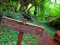 The Hoh River trail in Olympic National Park starts in the mossy and lush Hoh Rain Forest. From there you climb over 5,000 ft. in elevation along towering trees and rock to overlook the windswept Blue Glacier on Mt. Olympus. Tracing your steps back to the Hoh River visitors center the hike covers over 36 miles of diverse climate and ecosystems ranging from temperate rain forest to alpine.