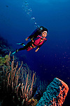 16 August 2005: Scuba diver Sally Herschorn glides along the reef in forty feet of water at Captain Don's Reef off the coast of Bonaire, in the Netherland Antilles. Housing used was an Aquatica D100 with 8 inch dome port and single port extension ring. Lighting with twin Ikelite 225s strobes, manual at 1/4 power setting...Mandatory Photo Credit: Ed Wolfstein Photo