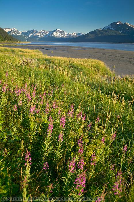 Turnagain Arm, south of Anchorage, Chugach National Forest, Alaska