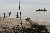 Children from Iolasa Island playing near the trunks of a fallen coconut tree, it's roots exposed by the sea, Carterets Atoll, Papua New Guinea, on Tuesday, Dec. 12, 2006. Rising sea levels have eroded much of the coastlines of the low lying Carteret islands (situated 80km from Bougainville island, in the South Pacific), and waves have crashed over the islands flooding and destroying what little crop gardens the islanders have. Food is in short supply, banana and swamp taro crops are failing due to the salt contamination of the land, and the islanders live on a meagre one meal per day diet of fish and coconut. There is talk by the Autonomous Region of Bougainville government to relocate the Carteret Islanders to Bougainville island, but this plan is stalled due to a lack of finances, resources, land and coordination.