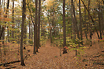 Trail in the Mt. Misery area of the Weston Massachusetts conservation land on a fall afternoon.