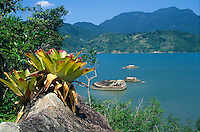 View of inlet along Atlantic coast in southeastern Brazil near Parati, Rio de Janeiro State; bromeliad on rock in foreground.