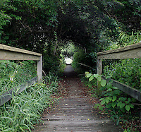 9 June 2006:  Green walkway to a small swamp along the Atlantic Ocean beach scene along the Outerbanks in North Carolina after a passing storm.