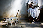A Buddhist nun cares for two cats in the Thai countryside at Wat Sri Thep Ni Mit Wararam in Saraburi, Thailand.