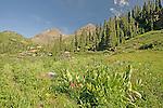 Wildflowers in Yankee Boy Basin San Juan Mountains Colorado
