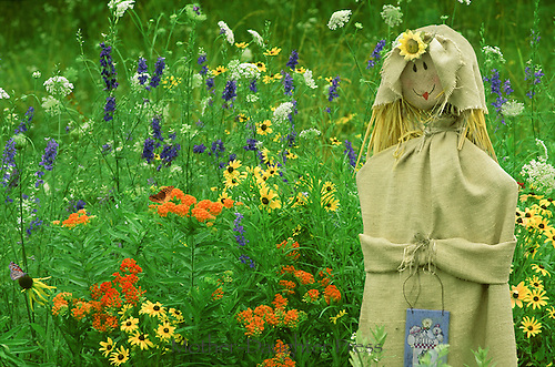 Madonna of the garden: Country Scarecrow dressed in burlap with purse and flowered cap among native flowers with butterflies