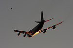 A commercial jet takes off in the evening sun.  A bird flies in close proximity to the jet.
