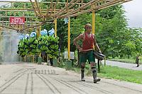 Banana plantation near Limon, Costa Rica, Central America.