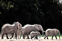 Family of elephants outlined by the sunlight walking across dusty earth in the Amboseli, Kenya, Africa (photo by Wildlife Photographer Matt Considine)