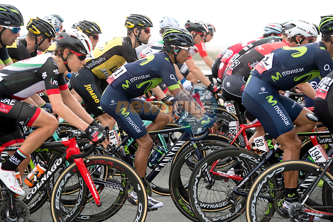 The peloton including Nairo Quintana (COL) Movistar Team in action during Stage 2 the Nation Towers Stage of the 2017 Abu Dhabi Tour, running 153km around the city of Abu Dhabi, Abu Dhabi. 24th February 2017<br /> Picture: ANSA/Claudio Peri | Newsfile<br /> <br /> <br /> All photos usage must carry mandatory copyright credit (&copy; Newsfile | ANSA)