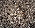 Bird skeleton, Gary, Indiana, March, 2008