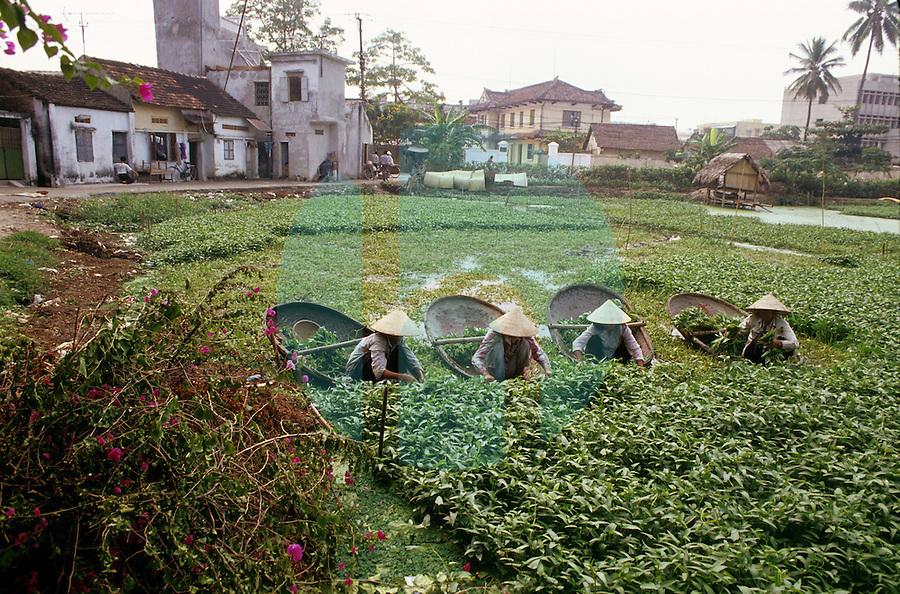 December 1993- NORTHERN VIETNAM- General views of Northern Vietnam.  Photo by Daniel J. Groshong/Tayo Photo Group