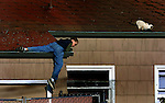 Alex McKinney, 11, carefully looks to climb down from the roof of the Rose Manor Hotel where he lives. He raises pidgeons which are up there a lot and he was trying to get the cat off the roof and away from them.