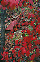 Red bridge with red leaves