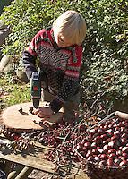 Kinder basteln mit Kastanien, Junge bohrt mit Akkubohrer Loch in Kastanie