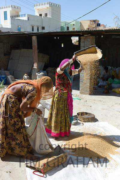Indian women winnowing grain by hand in village of Rohet in Rajasthan, Northern India