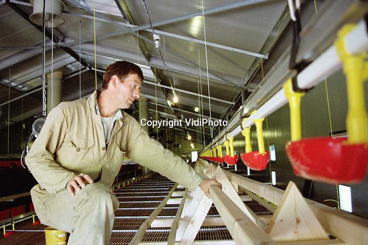 Foto: VidiPhoto..KOOTWIJKERBROEK - Varkens- en (vanaf volgende week dinsdag) ook kippenmester A. Vermeer uit Kootwijkerbroek krijgt de modernste scharrelkippenstal van Nederland. Vooral de zogenaamde balansventilatie en scharrelruimte is uniek voor ons land. Door onderafzuiging komt er minder stof en ammoniak in het milieu. Aan beide zijden van de stal is een grote scharrelruimte gebouwd, afgesloten met windbreekgaas. Daardoor is het er overdag licht, fris en toch droog. De kippen kunnen daarnaast ook nog eens naar buiten. Bovendien zijn er door de hele stal A-ruiters geplaatst, die dienen als verhoogde kippenstokken. Vrijdag houdt de kersverse kippenboer open dag. Dinsdag arriveren de 8500 scharrel-Frielandkippen...