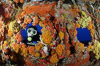 florida underwater photos