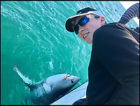 BNPS.co.uk (01202 558833)<br /> Pic: JayOxenham/BNPS<br /> <br /> Jay Oxenham's son John, 13 with the shark.<br /> <br /> When the shark bites...<br /> <br /> A Frank Sinatra impersonator stares down the 'pearly white' teeth of a monster 450lb shark he caught on a fishing trip of the coast of Cornwall.<br /> <br /> The enormous porbeagle shark, that is related to the deadly Great White, was caught one mile from shore by professional swing singer Jay Oxenham.<br /> <br /> Jay, 46, who performs all over Europe, spent almost two hours tussling with the gigantic 8ft long shark which was 'as wide as a cow' after it went for his mackerel bait.<br /> <br /> Weighing over 30st, the shark was far too big to lift on board the boat Jay was on so all he could do was bring it alongside to measure and photograph it - including the obligatory selfie - before releasing it safe and well.
