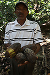 Ludovino Fernández, from La Cerca, holds cacao pods that have rotted too quickly. Locals are convinced it is due to contamination from the nearby Pueblo Viejo mine, located literally on the other side of the hill. Barrick and Goldcorp's Pueblo Viejo open-pit gold mine threatens the cocoa-bean producing community of La Cerca. Cotuí, Sánchez Ramírez, Dominican Republic. April 2012.