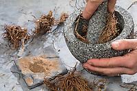 Baldrianwurzeln werden mit Mörser zerkleinert, getrocknete Baldrian-Wurzel, Baldrian-Wurzeln, Valerianae radix, Wurzelpulver, Baldrian, Echter Baldrian, Echter Arznei-Baldrian, Arzneibaldrian, Katzenwurzel, Wurzel, Wurzeln, Wurzelstock, Valeriana officinalis, Common Valerian, Root, Roots, root stock, Valériane officinale