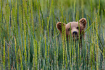 Please call 888-973-0011 or email info@artwolfestock.com to license this image or purchase a limited edition print.<br />