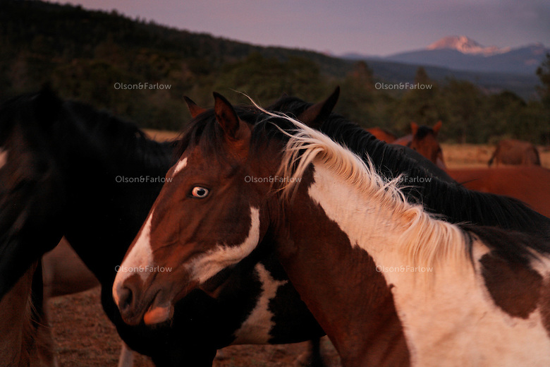 Blue-Eyed-Paint-at-Wild-Horse-Sanctuary.