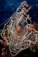 DEWDROPS ON SPIDER'S WEB<br /> Surface tension<br /> The cohesion of water that causes formation of drops is due to its strong Hydrogen bonds.