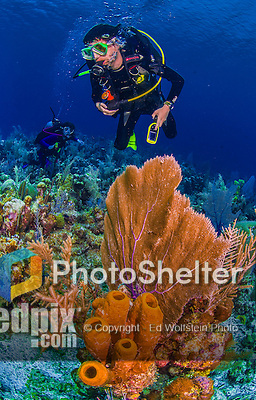 8 June 2015: SCUBA divers Josh Wolfstein and Sally Herschorn explore the scenery at Ocean Point Reef, on the North Shore of Grand Cayman Island. Located in the British West Indies in the Caribbean, the Cayman Islands are renowned for excellent scuba diving, snorkeling, beaches and banking.  Mandatory Credit: Ed Wolfstein Photo *** RAW (NEF) Image File Available ***