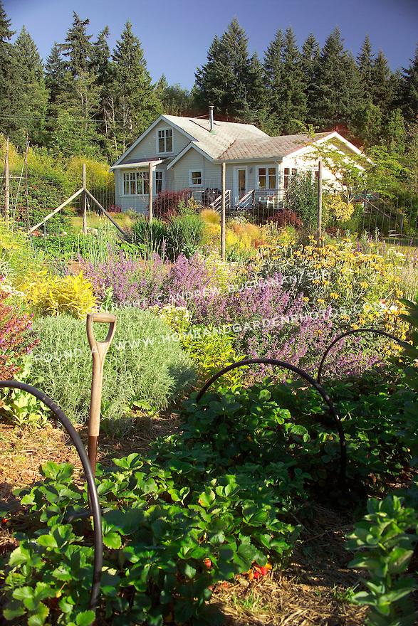 Df001009 Kitchen Garden