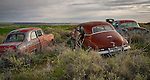 Idaho, Southwest, Elmore County, Grandview. A collection of vinatge rusted autos in a farmers field.