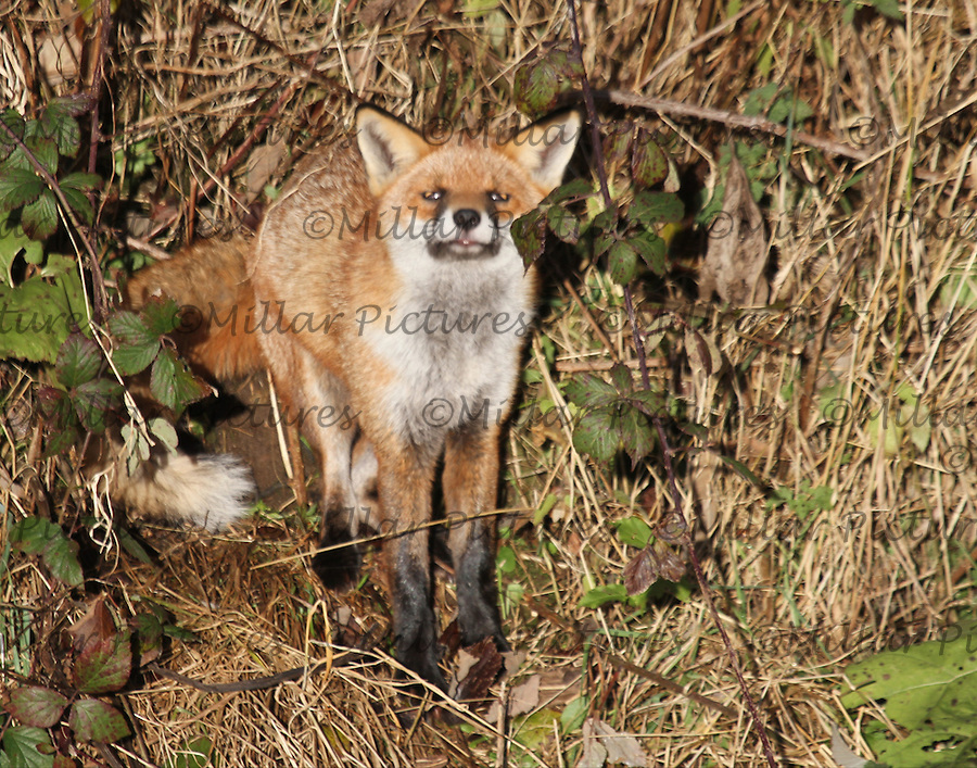 Wildlife at Glasgow Prestwick Airport