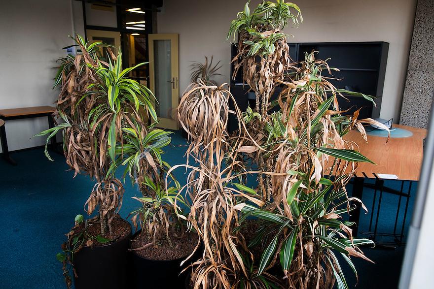Nederland, Lemmer, 7 sept 2014<br /> Voormalig stadhuis van Lemmer. Nu een leegstaand gebouw met nog allerlei sporen van het gebruik: achtergelaten meubilair, kantoorspulletjes en inmiddels verdroogde planten. Het kantoor staat leeg en is tijdelijk gebruikt als expositieruimte<br />  <br /> Foto: (c) Michiel Wijnbergh