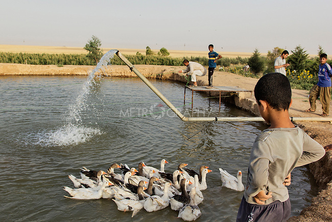 04/07/2015 -- Dibaga-Makhmur-, Iraq -- An aquaculture, where IDPs from Jaralah village can farm fish to sell in Dibaga. The aquaculture belongs to the owner of the farm who has given it to the IDPs to look after. In return they sell the fish and earn some money for it.