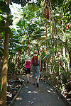 Hikers walk through a licuala palm forest on the Dubuji Boardwalk.  Capte Tribulation, Daintree National Park, Queensland, Australia