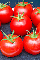 Tomato 'Mecano' vegetable tomatoes, red ripe picked crop, fresh