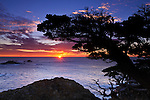 Cypress Tree (Cupressus macrcarpa) at sunset, Point Lobos State Reserve, Carmel, California USA