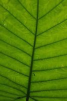 Backlit leaf at Kuang Si Waterfall approx 30KM from Luang Prabang, Laos