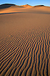 Evening light on the Mesquite Flat sand dunes, Death Valley National Park, California USA